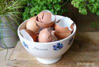 skorupka z jajek dla psów