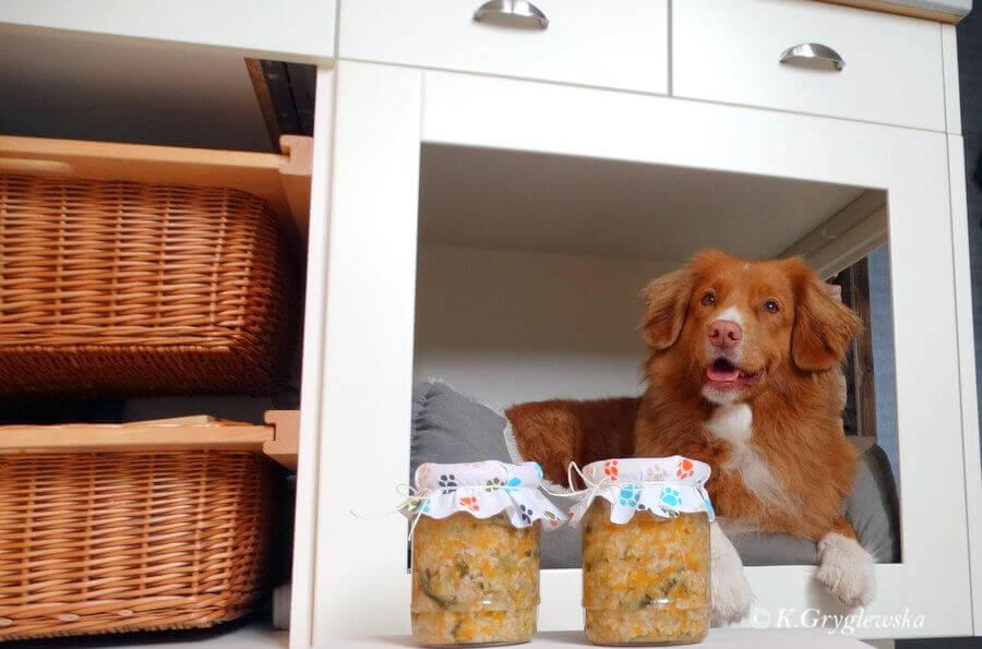 domowe jedzenie dla psa