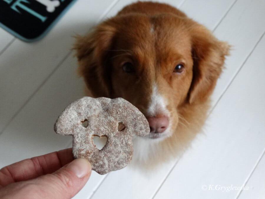 ciastka dla psa