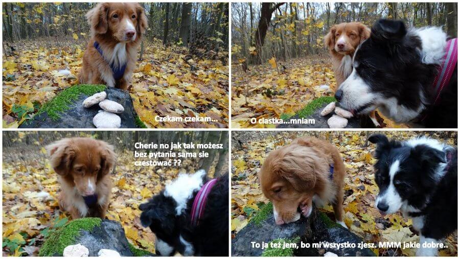 psia impreza