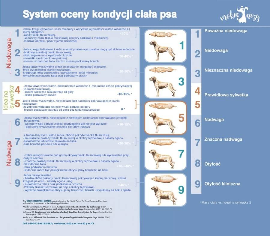 BCS ocena kondycji ciala psow