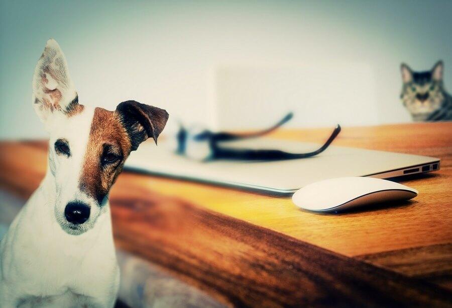 ocena kondycji ciala psa BCS