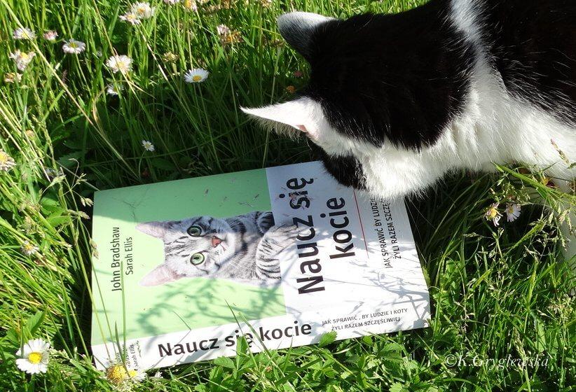 kot czyts John Bradshaw Naucz sie kocie
