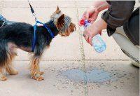 Udar cieplny pies dostaje wodę