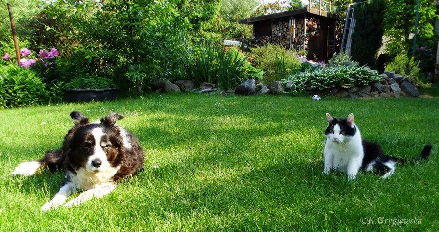 pies z kotem w ogrodzie
