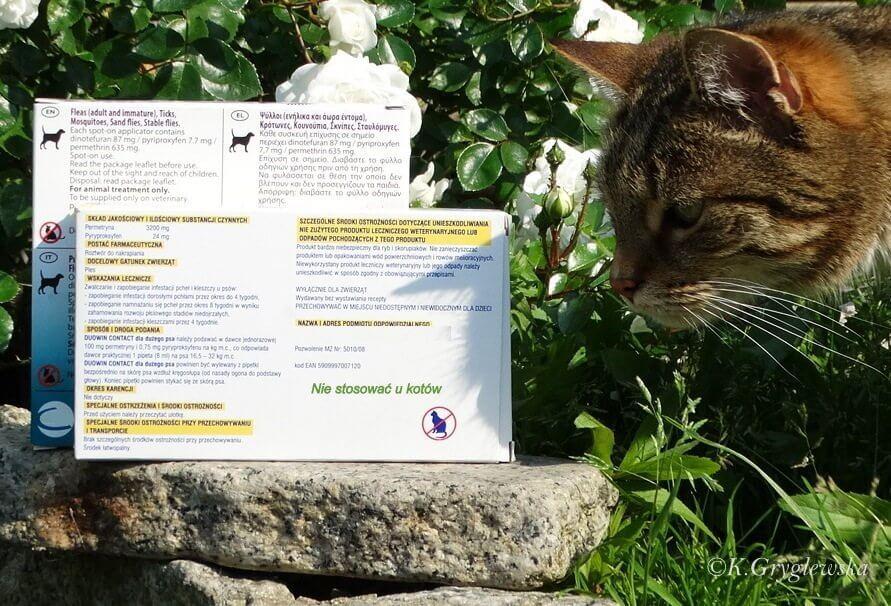 preparat szkodliwy dla kotow
