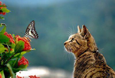 adoptuj kota
