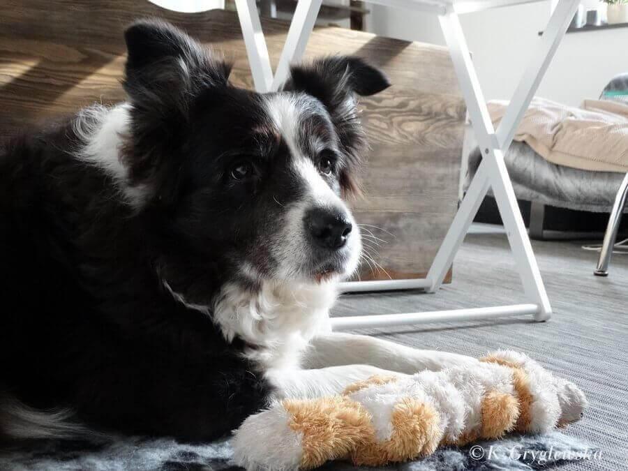 ciasteczka w psy