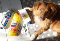zatrucie psa lekami bateriami detergentami
