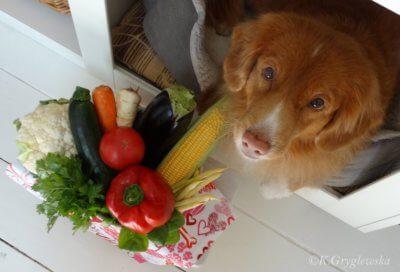 dieta wegańska dla psa