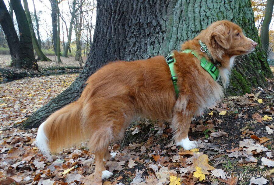 pies w parku